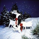 Graceful Reindeer